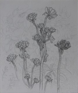 LA Garden (Pencil on Paper, 253mm x 211, 2014),