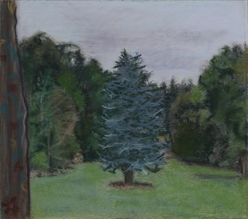Cedar Tree (Soft Pastel on Paper, 296mm x 337mm, 2016)